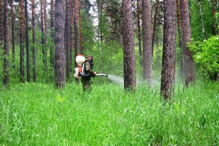 Обработка от клещей лесных массивов в Клину